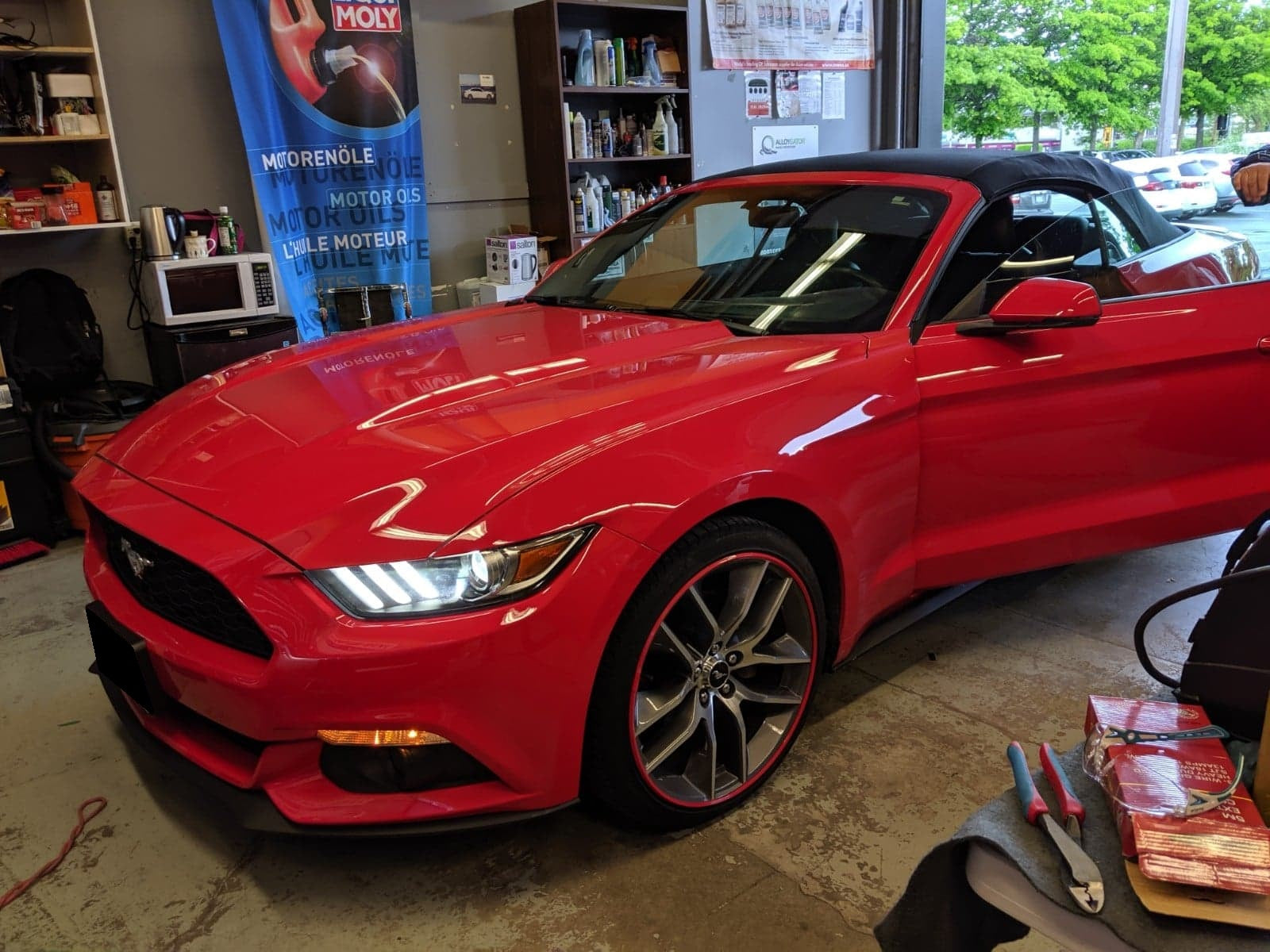 Red mustang red alloygator