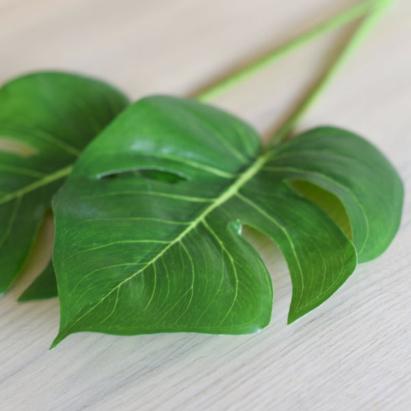 Monstera Leaf - Faking Beautiful