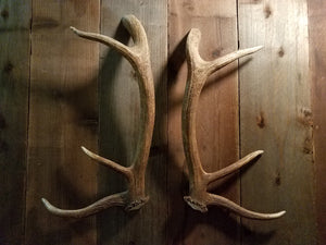 Elk Antler Door Handle Set by Antler Artisans