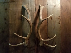 5 x 5 Elk Antler Door Handle Set by Antler Artisans
