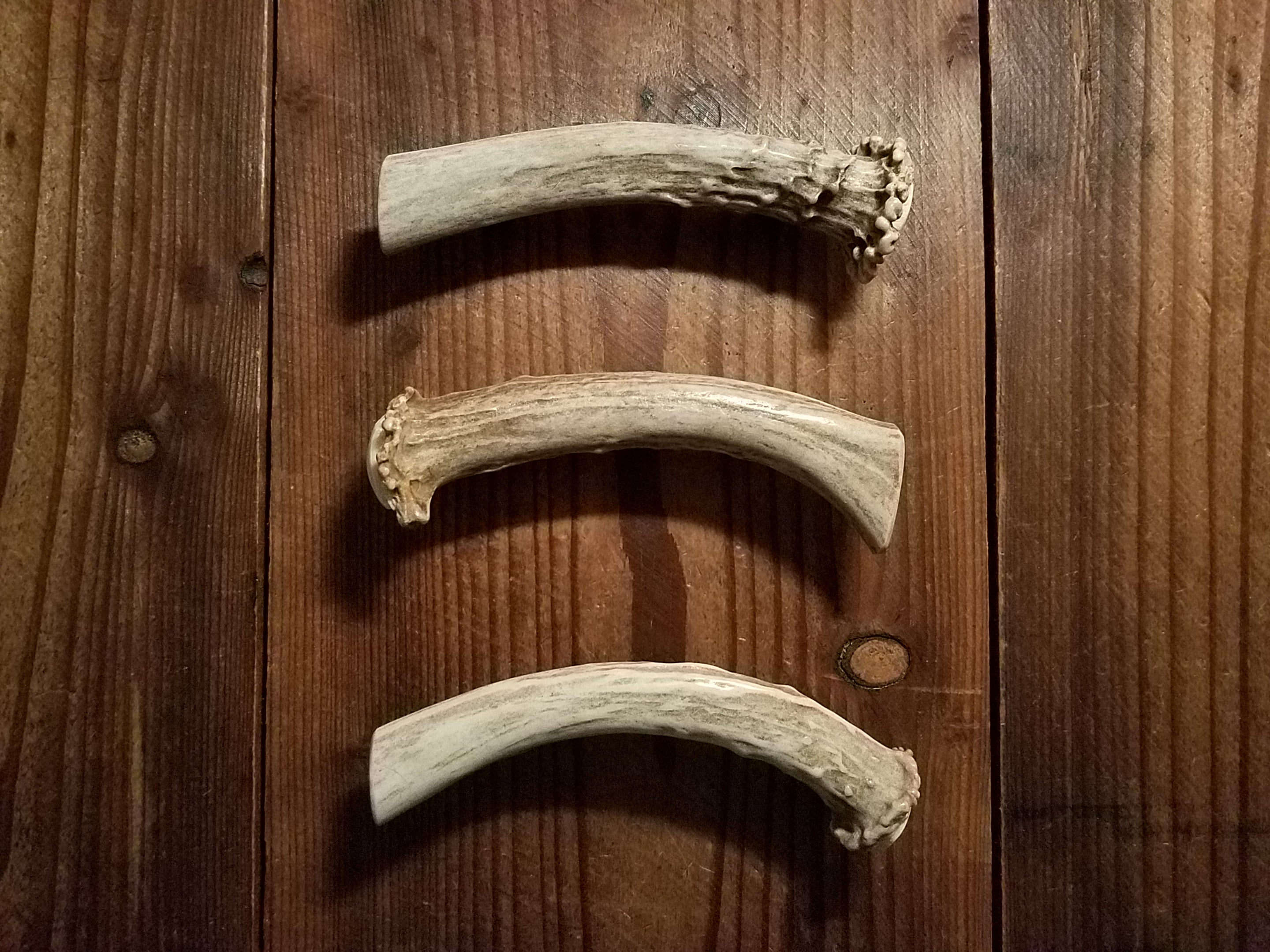 Shed Deer Crown and Beam Antler Handle Pull