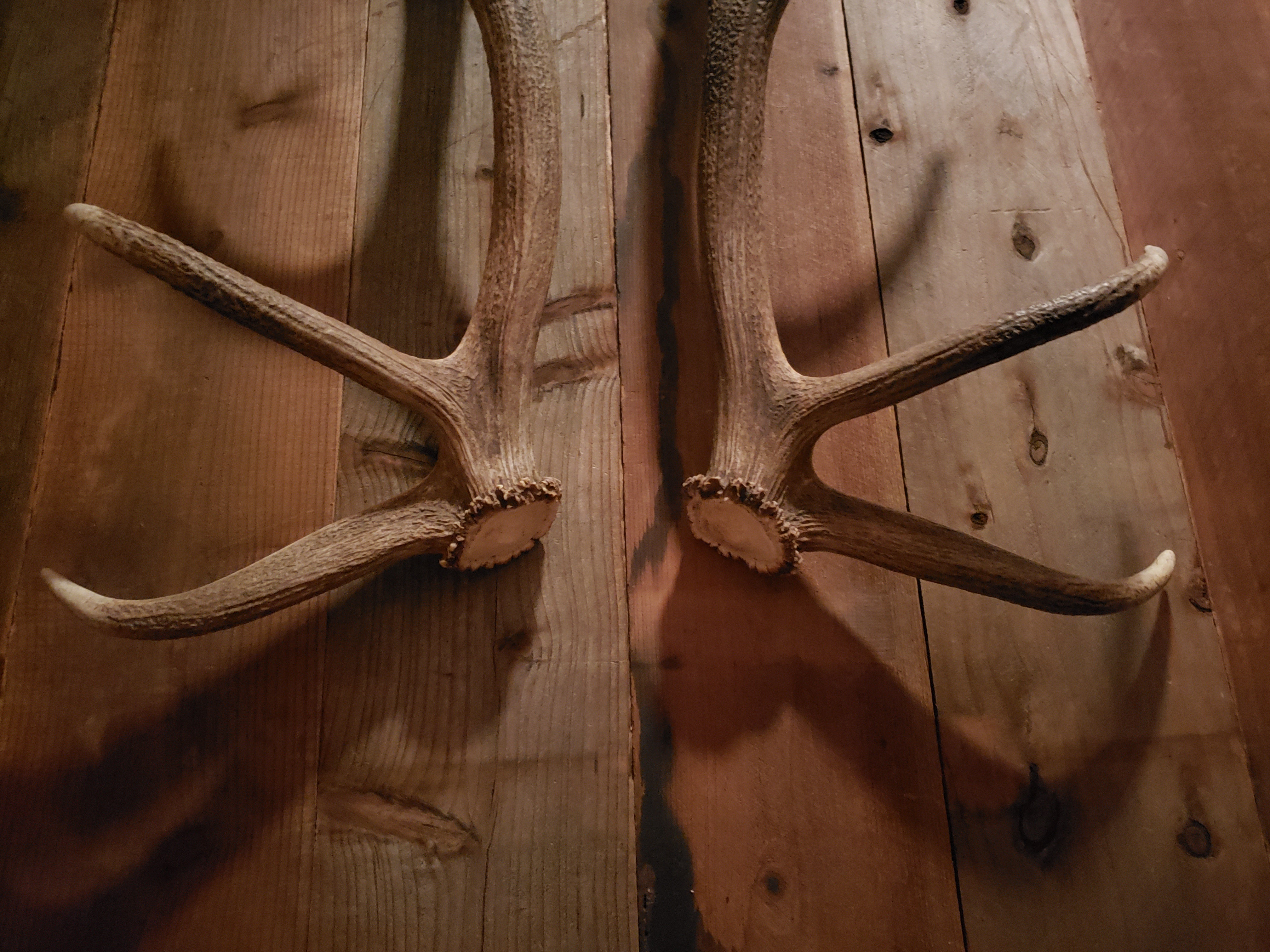 Elk Antler Door Handle Set