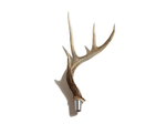 Antler Beer Tap Handle by Antler Artisans