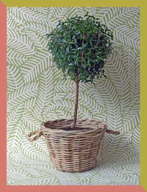 WOVEN PLANTER BASKET WITH HANDLES