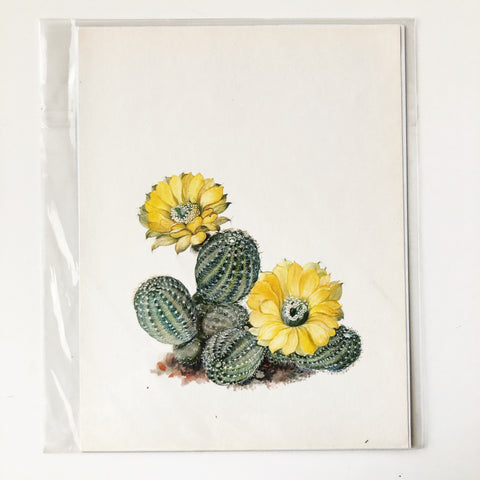 1970s Cactus and Succulent Book Plate 9