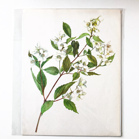 1960s Botanical Book Plate 44