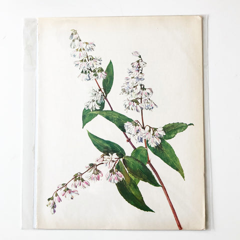 1960s Botanical Book Plate 6
