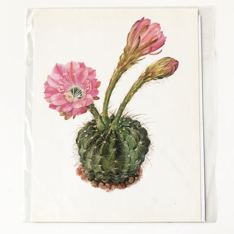 1970s Cactus and Succulent Book Plate 8