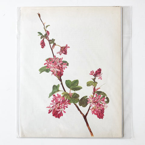 1960s Botanical Book Plate 9