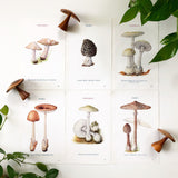 Set of 6 Early 1900s Mushroom Identification Engravings