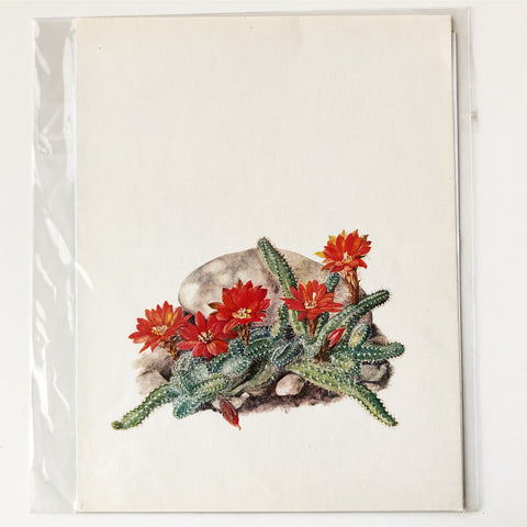 1970s Cactus and Succulent Book Plate 18