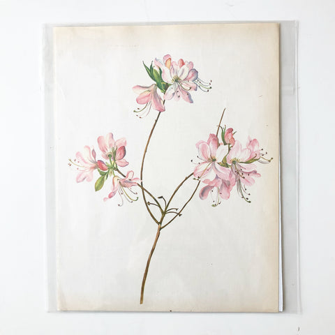 1960s Botanical Book Plate 5