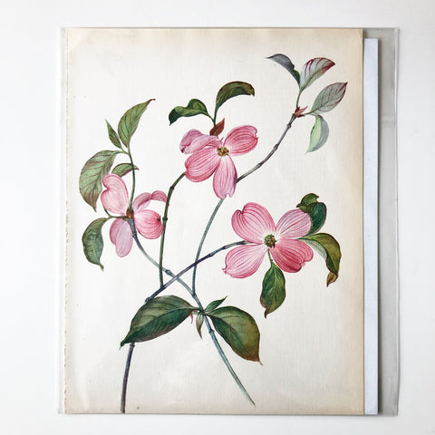 1960s Botanical Book Plate 17