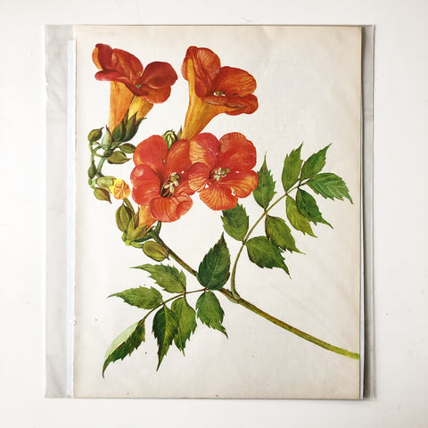 1960s Botanical Book Plate 27