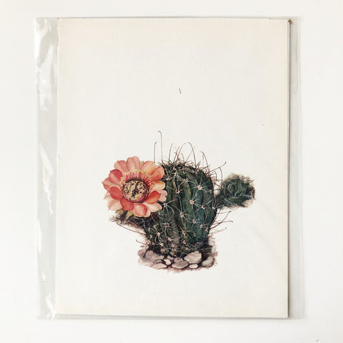 1970s Cactus and Succulent Book Plate 5