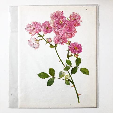 1960s Botanical Book Plate 57