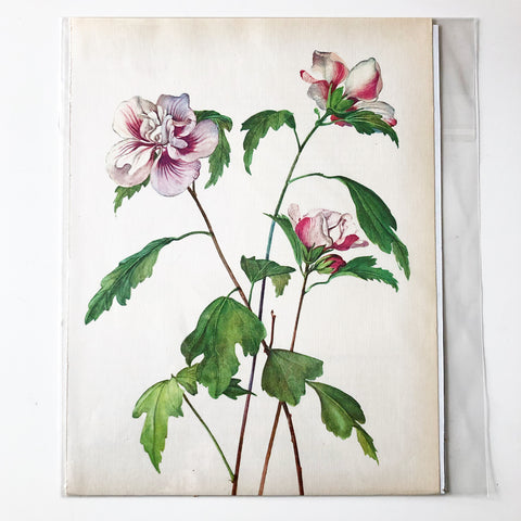1960s Botanical Book Plate 15