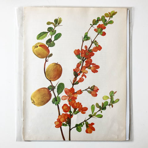 1960s Botanical Book Plate 3