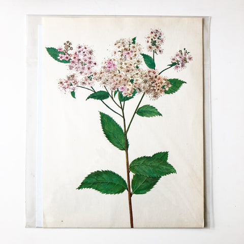 1960s Botanical Book Plate 35