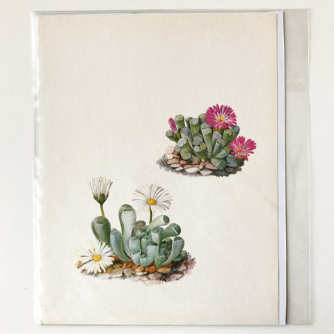 1970s Cactus and Succulent Book Plate 1