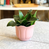 Baby Pink German Planter