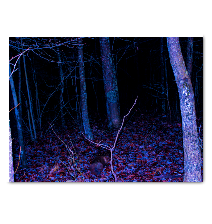 Fine Art Canvas - Dark Forest