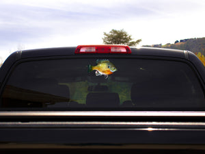 Bluegill Truck Decal