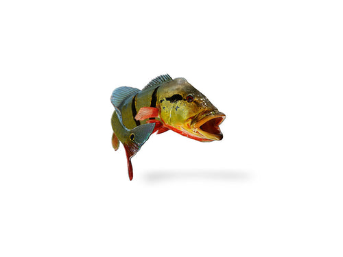 Jumping Peacock Bass Decal