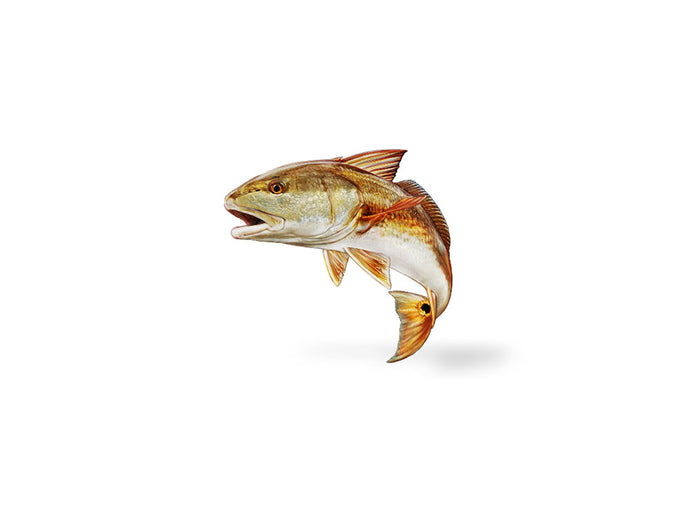 Jumping Redfish Decal
