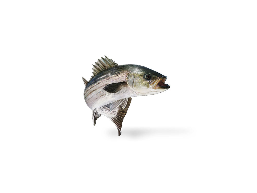 Jumping Striper Decal