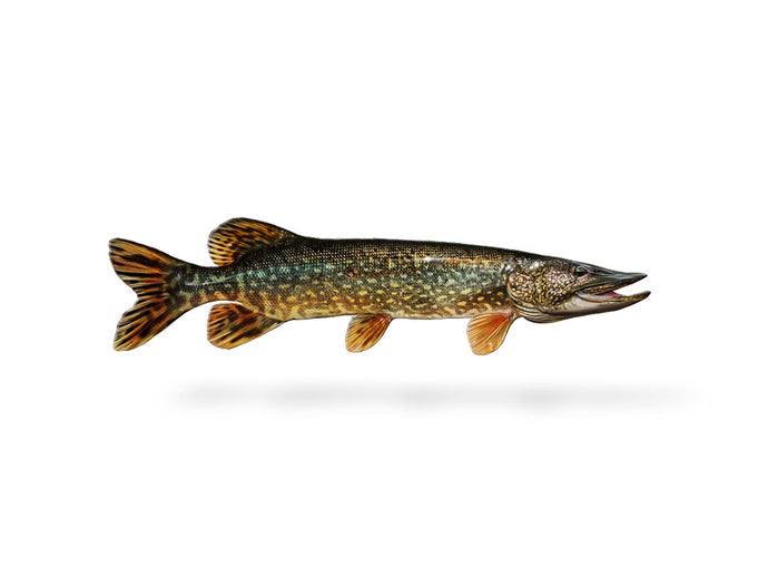 Northern Pike Decal