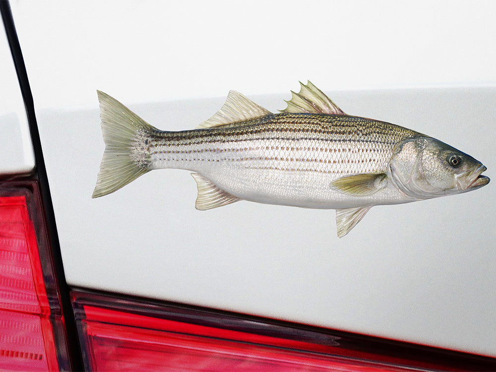 Absolutely useless. large striped bass decal