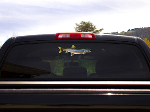 Lake Trout Truck Decal