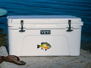 Bluegill cooler decal