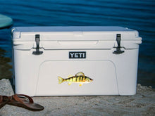 yellow perch cooler decal