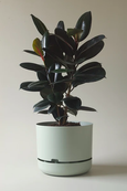 Mr Kitly - Self-Watering Plant Pots - 375mm