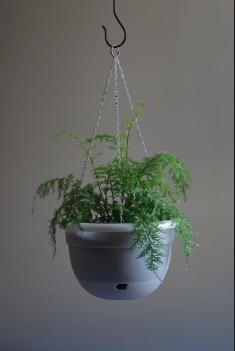 Mr Kitly -  Self-watering Hanging Pot 340mm - PICK UP ONLY