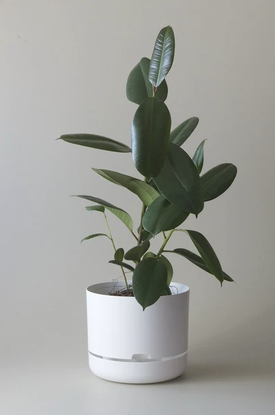 Mr Kitly - Self-Watering Plant Pot - 300mm - PICK UP ONLY