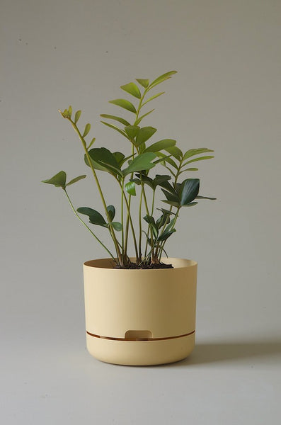 Mr Kitly - Self-Watering Plant Pots - 215mm - PICK UP ONLY