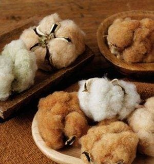 Cotton Grown in Color