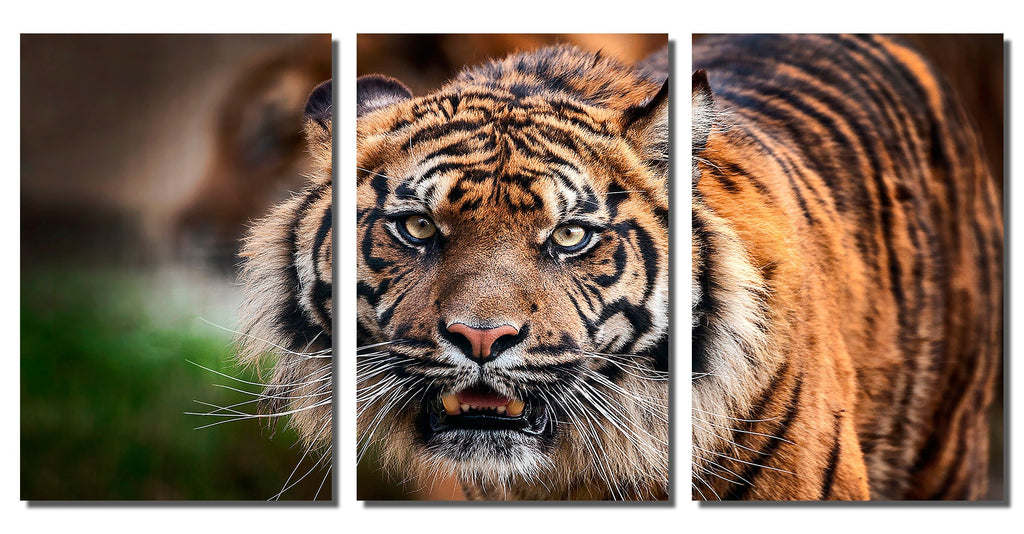 "Tiger Portrait on HD Metal Thickness .045"" - 3 Piece Set"