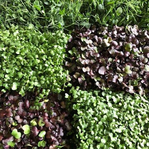 Microgreens - Try Vegan Meal Delivery Vegan Home Meal Delivery