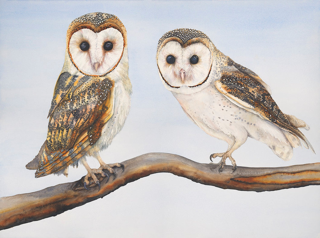 Owl:  Barn Owls