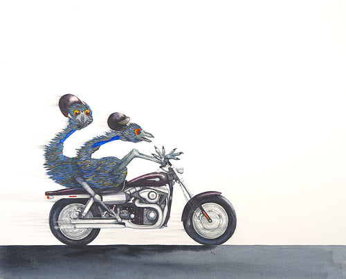 Motorcycle:  Emus can fly!