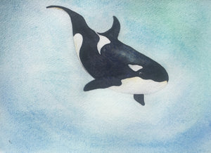 Life is but a dream for this orca enjoying life in clear, blue waters.