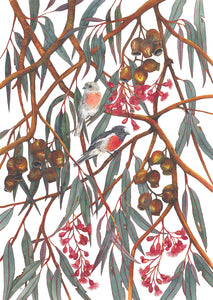 "Bird watercolour print- ""Scarlet Robins"""