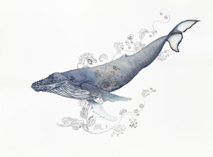 A humpback whale, looking quite happy and relaxed, with swirling, unfurling sea plants accompanying it.