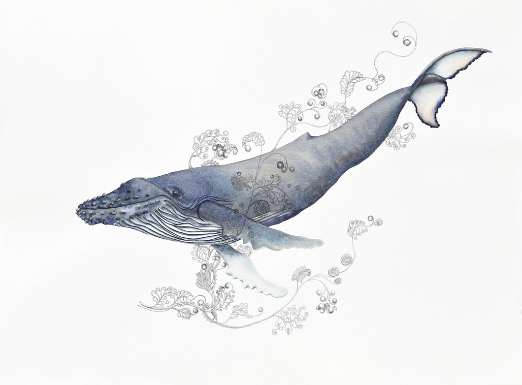 Sea Life: A print of a water colour painted humpback whale