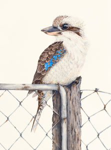 Sitting on the Fence - A print of a watercolour painting of a Kookaburra