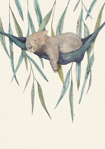 This is a water colour painting of a cute sleepy wombat cuddled up in a hammock among gum leaves.